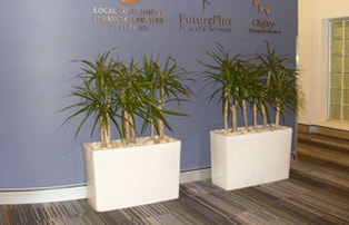 Pall Mall Plants Office Plants